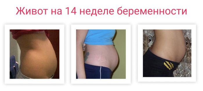 живот беременной на 14 неделе беременности