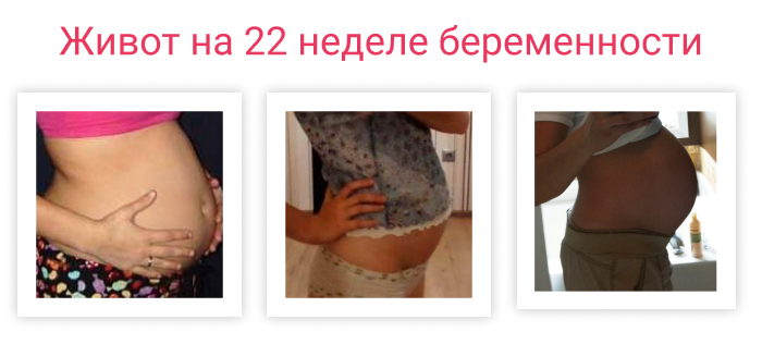 живот на 22 неделе беременности