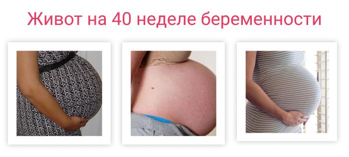 живот на 40 неделе беременности